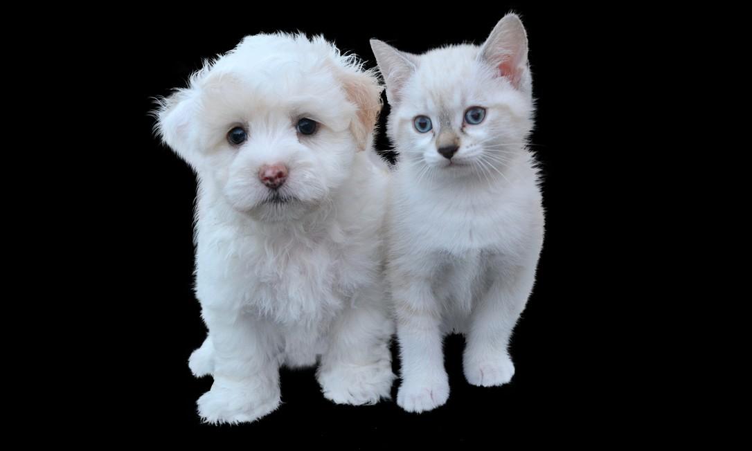 Cães e gatos poderão relaxar com o Spotify, diz empresa. Foto: Pixabay
