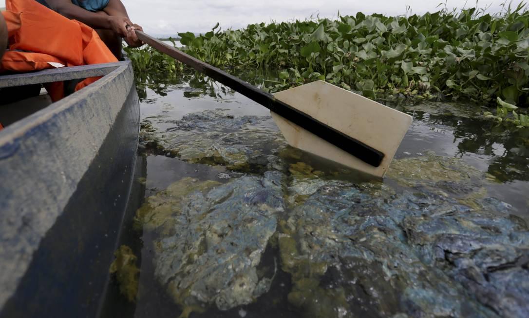 Esgoto na represa do Rio Guandu, onde a água distribuída pela Cedae é captada Foto: Custódio Coimbra / Agência O Globo - 15/01/2020