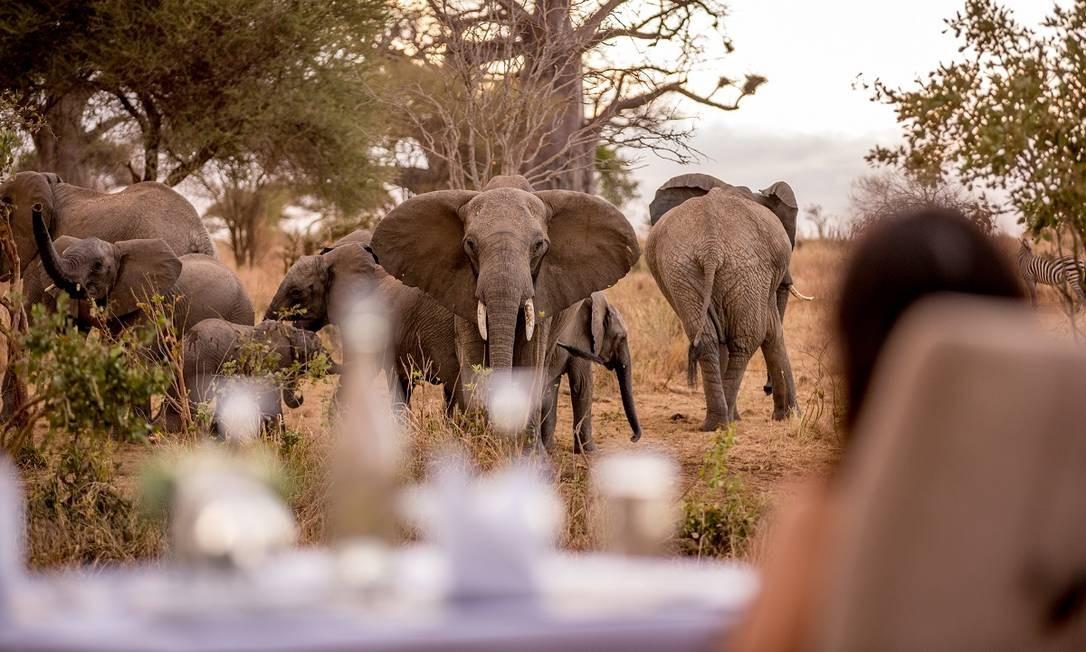 Parece que uma manada de elefantes chegou para o piquenique Foto: Divulgação