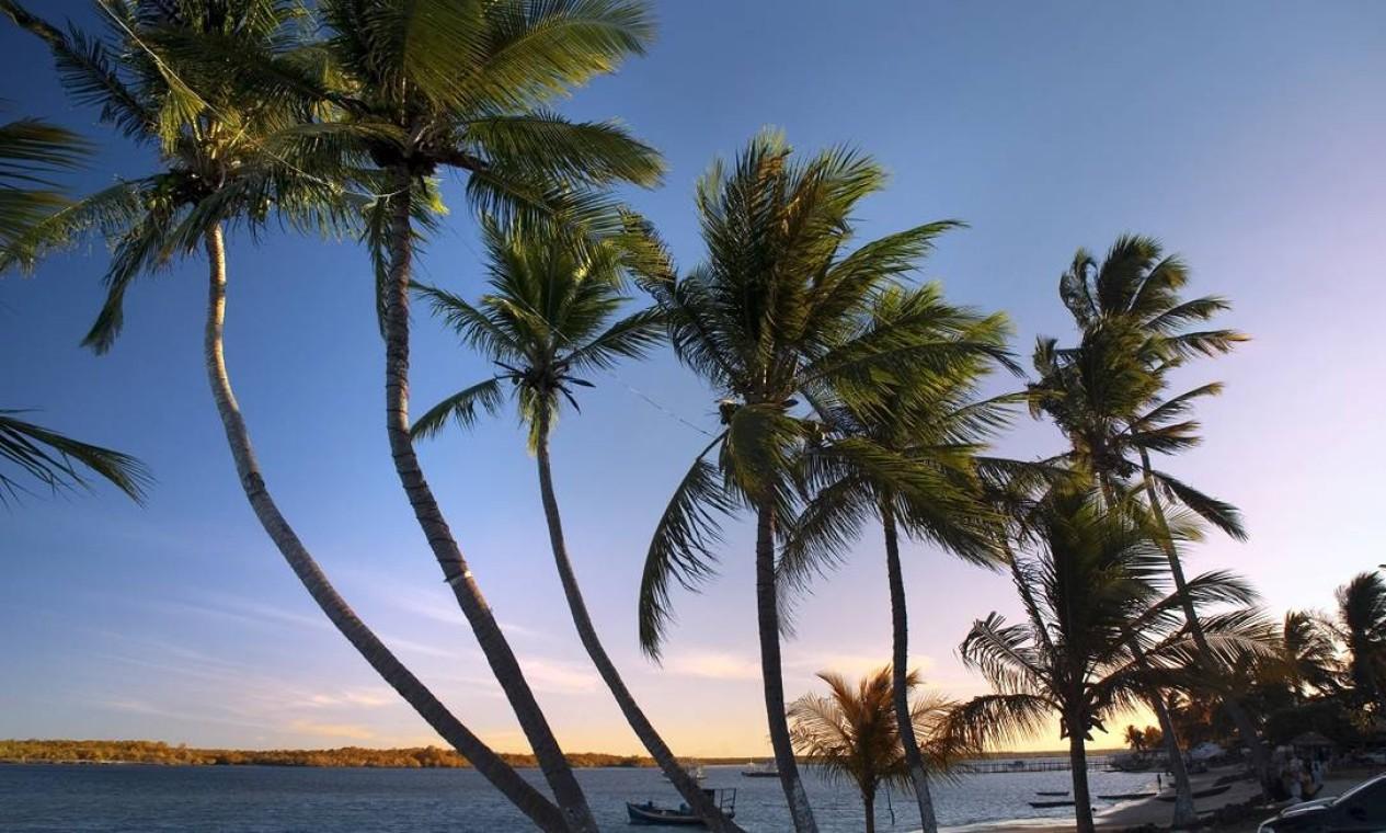 Os coqueiros em Barra do Cunhaú, outro passeio imperdível em Pipa Foto: Giovanni Sérgio / Secretaria de Turismo do Rio Grande do Norte / Divulgação