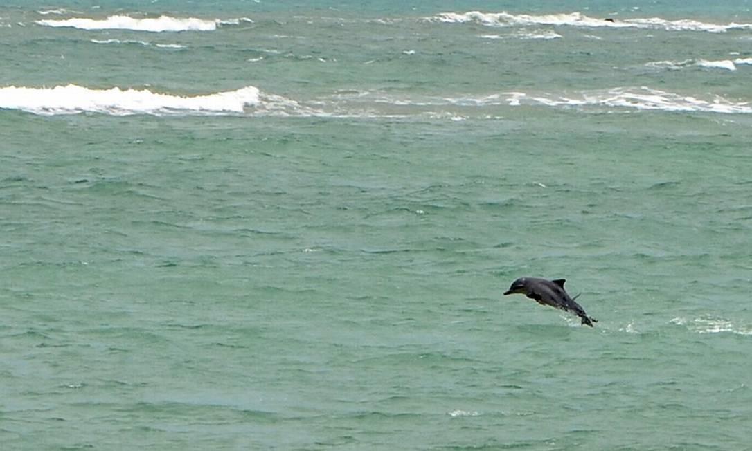 Na Baía dos Golfinhas, os cetáceos são presença constante Foto: Ministério do Turismo / Divulgação