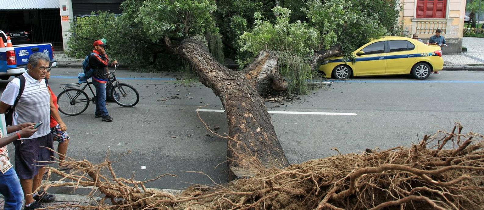 Árvore cai sobre de táxi na Avenida Mem de Sá, próximo aos Arcos da Lapa Foto: Gabriel de Paiva / Agência O Globo