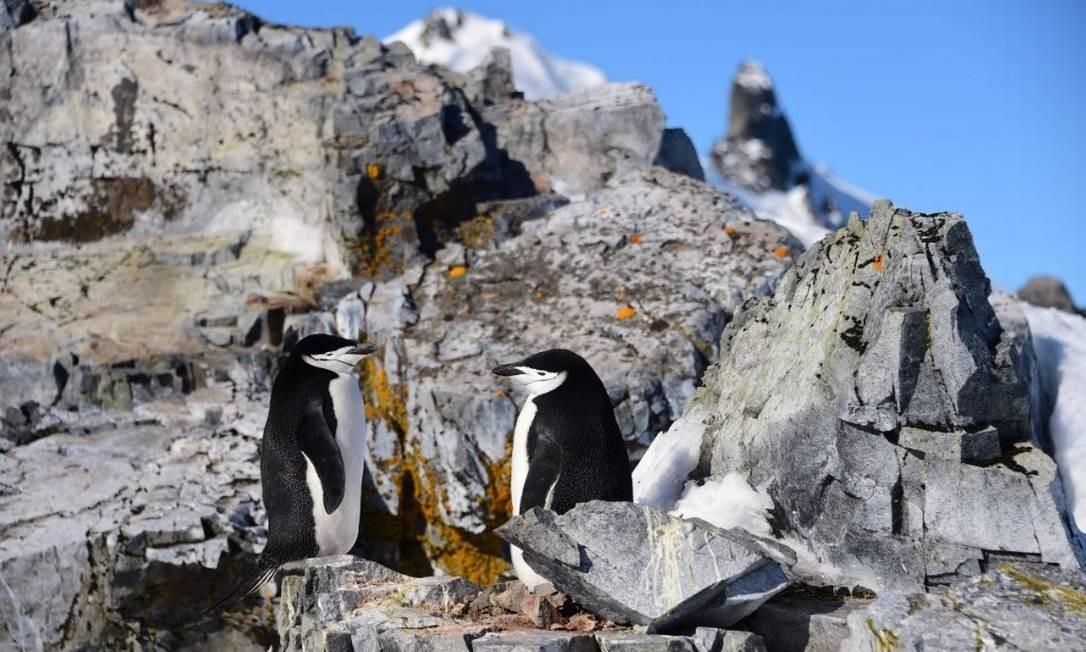 Pinguins nas Ilhas Shetland do Sul: variações climáticas em regiões da Antártica podem comprometer temperaturas de toda a península Foto: JOHAN ORDONEZ/AFP/27-11-2019