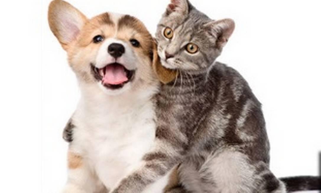 Cães e gatos: mercado de 'pets' aquecido. Foto: Arquivo