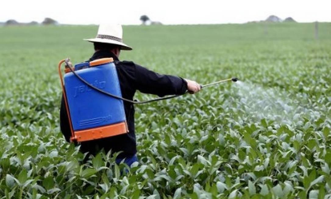 Plantação de soja no Brasil Foto: Michel Filho