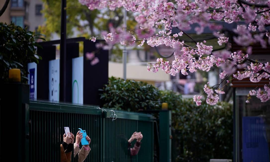 Pessoas fotografam flores de cerejeira em frente a uma entrada de um parque fechado, por conta do surto de Covid-19, em Xangai, na China, nesta sexta-feira Foto: Aly Song / Reuters