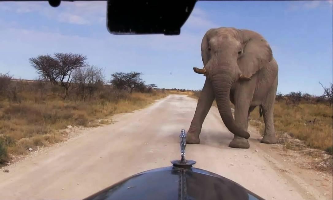 Um elefante cruza o caminho do Graham-Paige na África Foto: Álbum de família