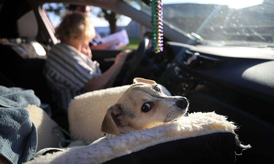 A cadela Layla conseguiu um novo lar em Nova Orleans nesta semana Foto: Chris Graythen / Photographer: Chris Graythen/Get