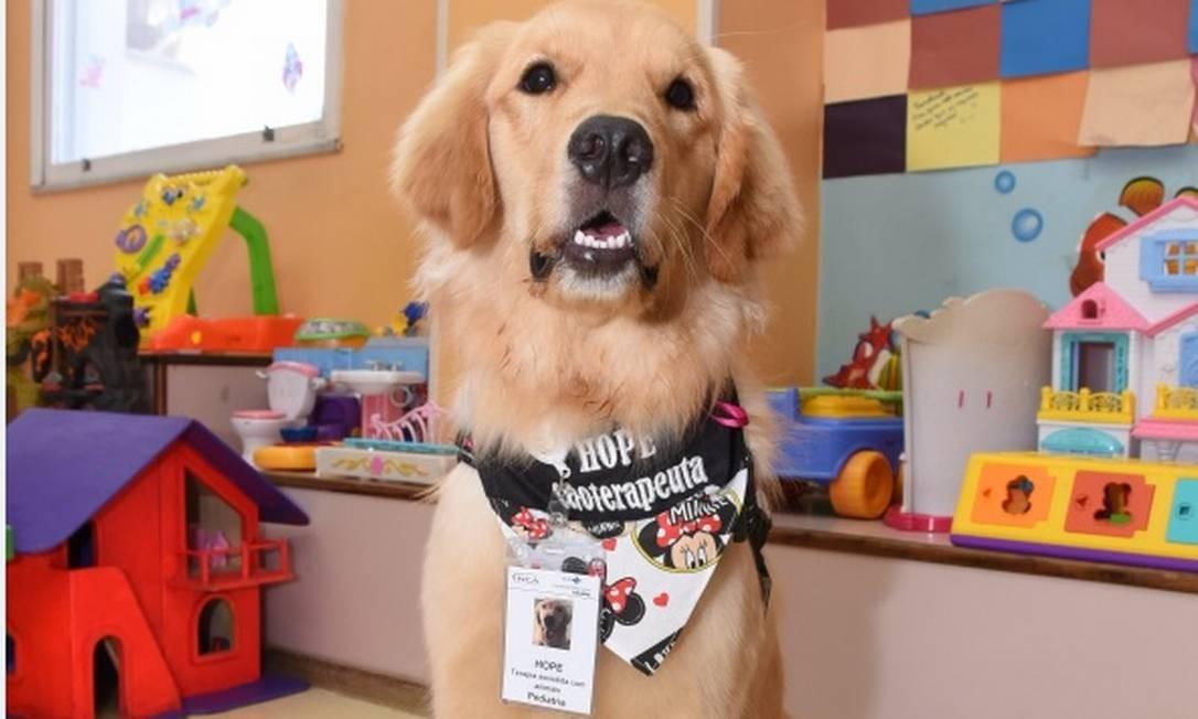Hope. A cadela dá expediente duas vezes por semana no Inca Foto: Divulgação/Inca /