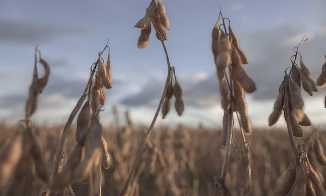 Colheita de soja em fazenda da Bahia Foto: Daniel Marenco / Agência O Globo