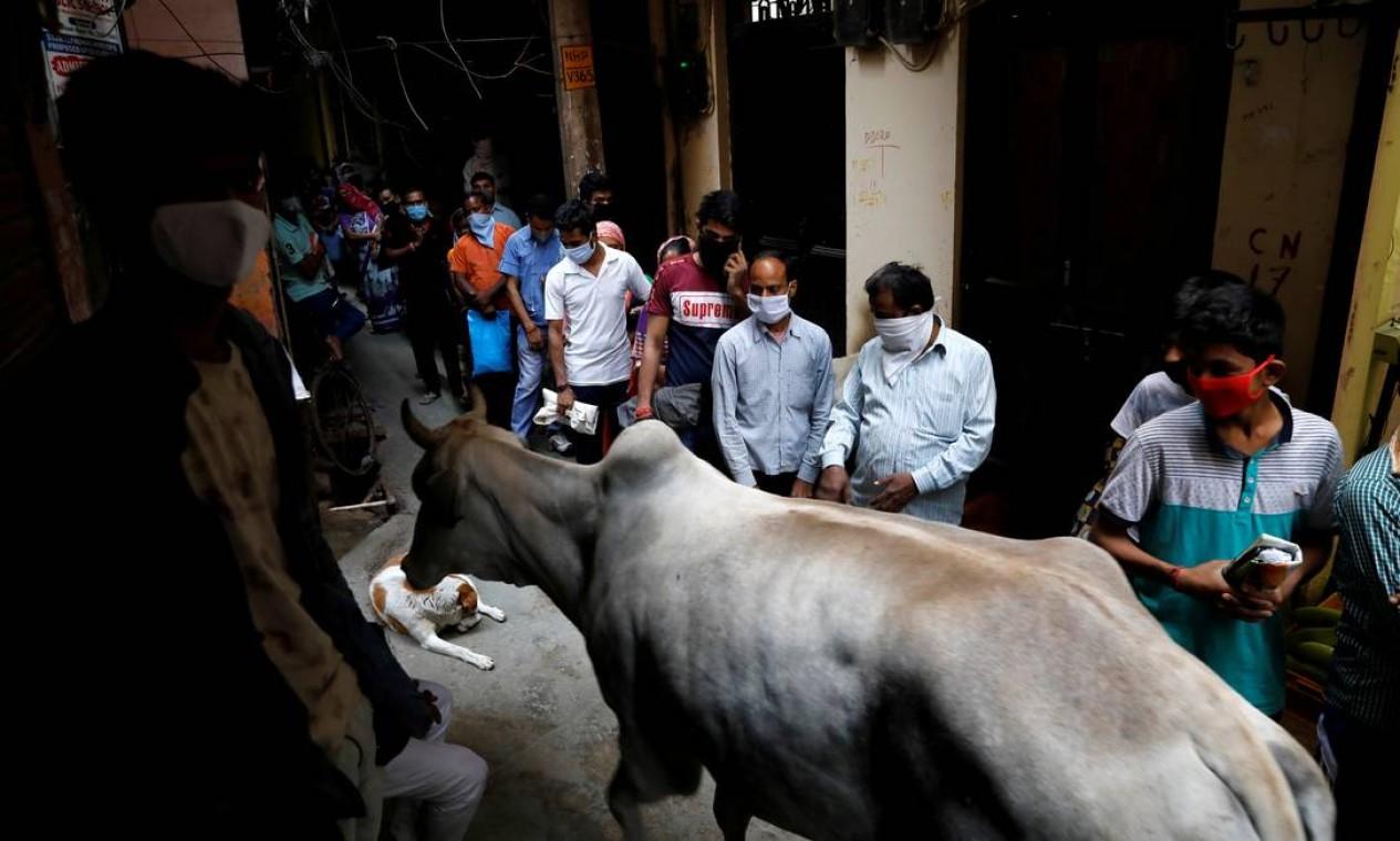 Uma vaca passa pelas pessoas enquanto elas ficam na fila de um beco para coletar alimentos grátis de uma mercearia, em Nova Délhi' Foto: ANUSHREE FADNAVIS / REUTERS