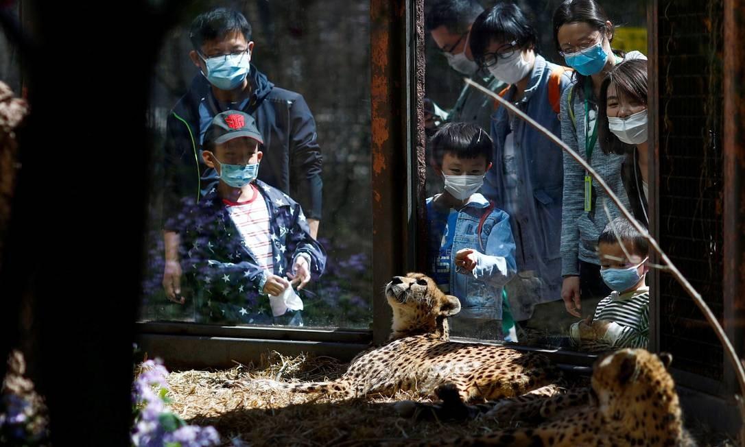 Os visitantes que usam máscaras protetoras olham para as chitas no zoológico de Pequim, na China, durante o surto da doença por coronavírus Foto: THOMAS PETER / REUTERS