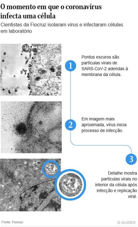 Imagens inéditas flagram momento exato da infecção do novo coronavírus em célula Foto: Arte/O GLOBO