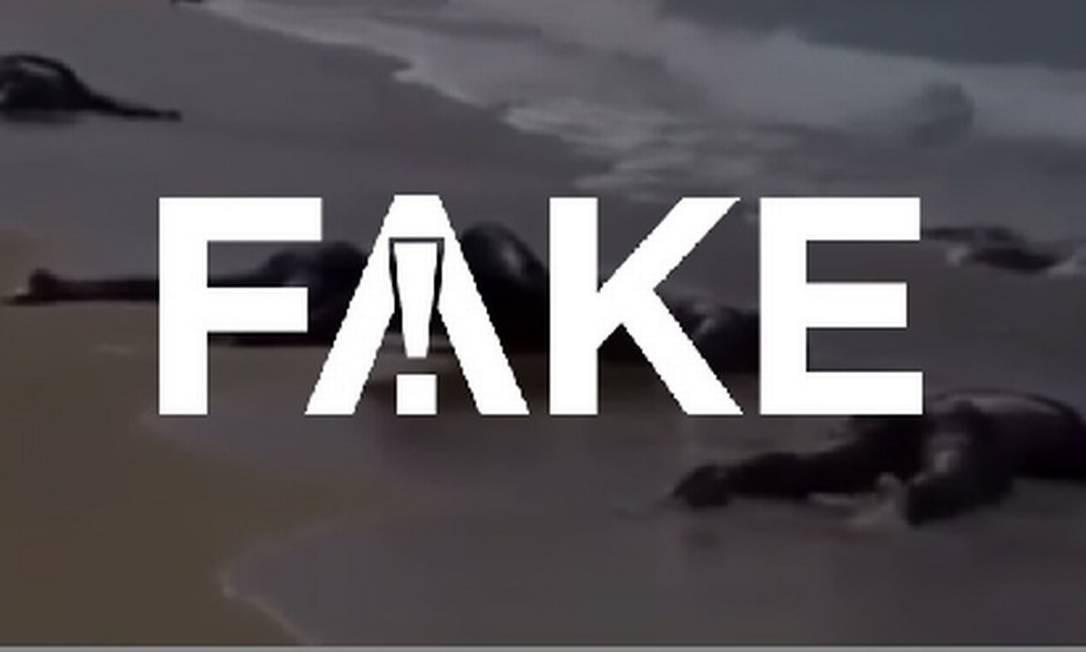 É #FAKE que vídeo mostre corpos de vítimas da Covid-19 em praias do Peru e do Equador Foto: Reprodução