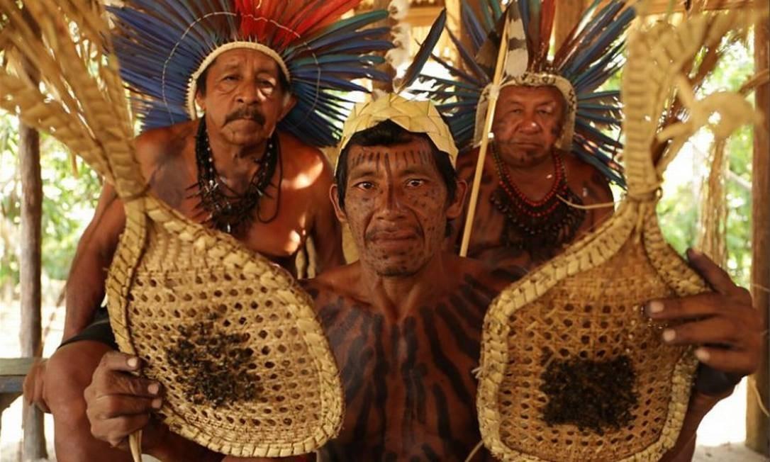 O povo Sateré Mawé é conhecido como um dos descobridores do guaraná e por seu ritual com as terríveis formigas tucandeiras, que representa a transição da infância para a vida adulta dos homens Foto: Reprodução