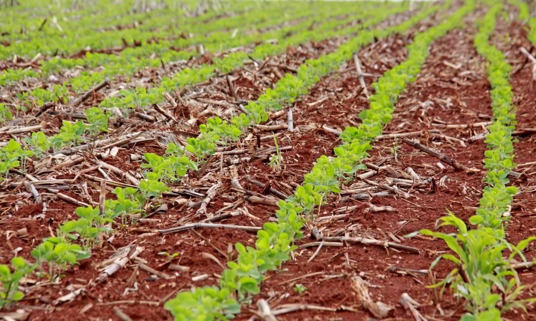 Regiões onde a agropecuária é mais forte devem sofrer menos com a crise Foto: Fotoarena / Agência O Globo