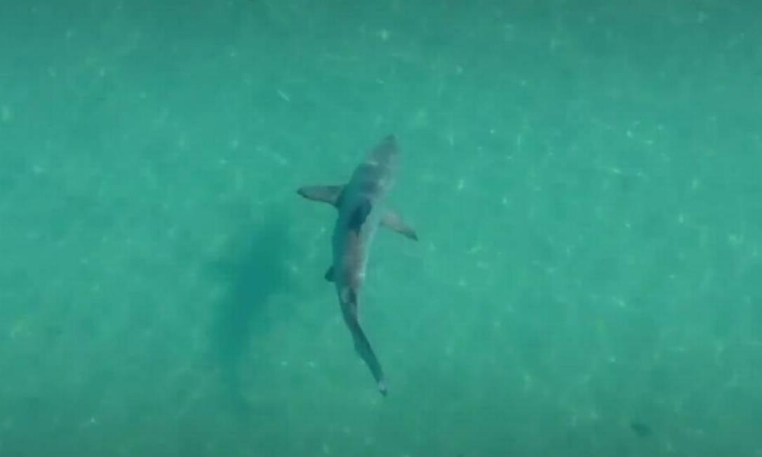 Tubarão-galha-preta em Praia de Angra dos Reis Foto: Divulgação/LuxxBoat