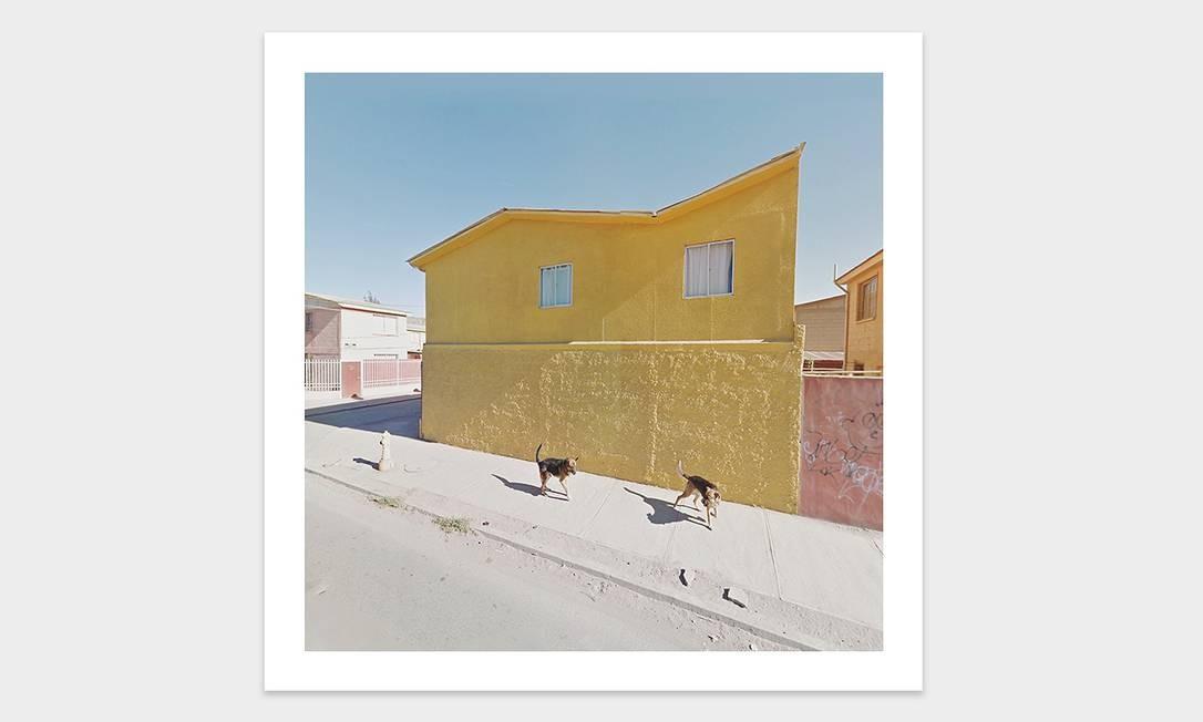 Cachorros diante de uma casa amarela flagrados por Kenny Foto: Jacqui Kenny / Divulgação