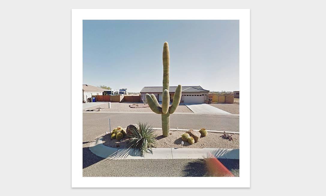 Cactus em rua dos EUA Foto: Jacqui Kenny / Divulgação