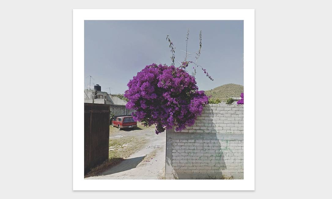 Flores em uma propriedade no Peru Foto: Jacqui Kenny / Divulgação