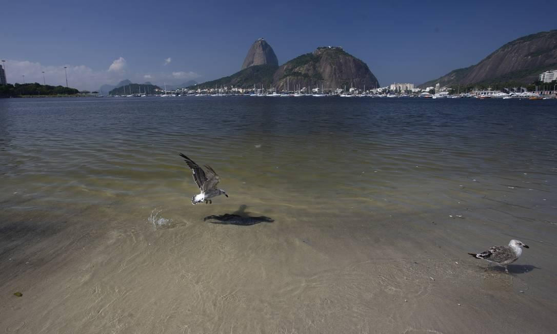 Águas limpas no mar da Enseada de Botafogo. Um vídeo que começou a circular no domingo mostrava a transparência do mar na enseada, conhecida por ser uma das praias mais poluídas banhada pela Baía de Guanabara Foto: Márcia Foletto / Agência O Globo