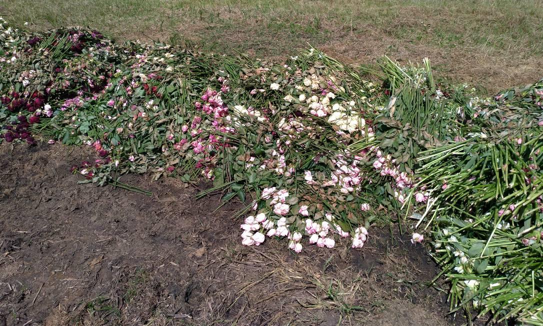 Mais de 40 milhões de flores em todo o país viraram adubo ou foram para o lixo Foto: Divulgação