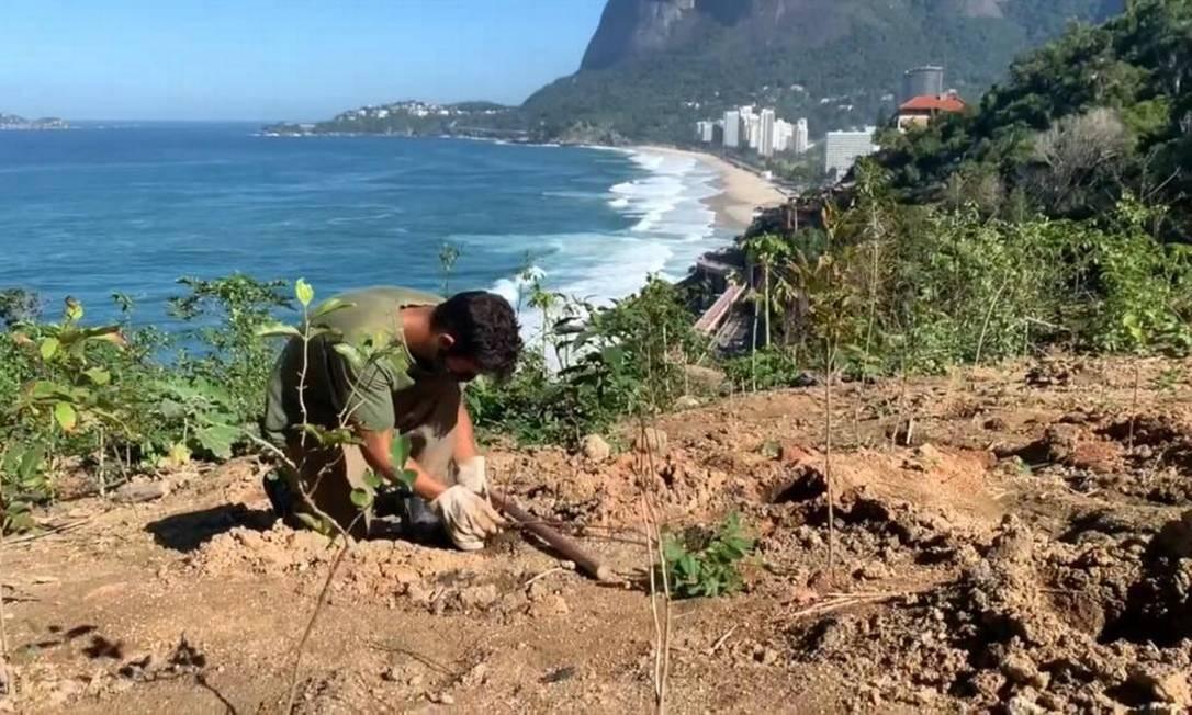 Trabalhadores iniciam plantio na encosta do Vidigal Foto: Divulgação/Hudson Pontes