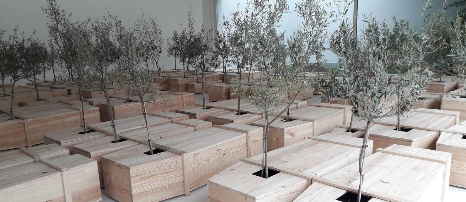 """Árvores brotam dos caixões da instalação """"EX IT"""" Foto: Gian Amato"""