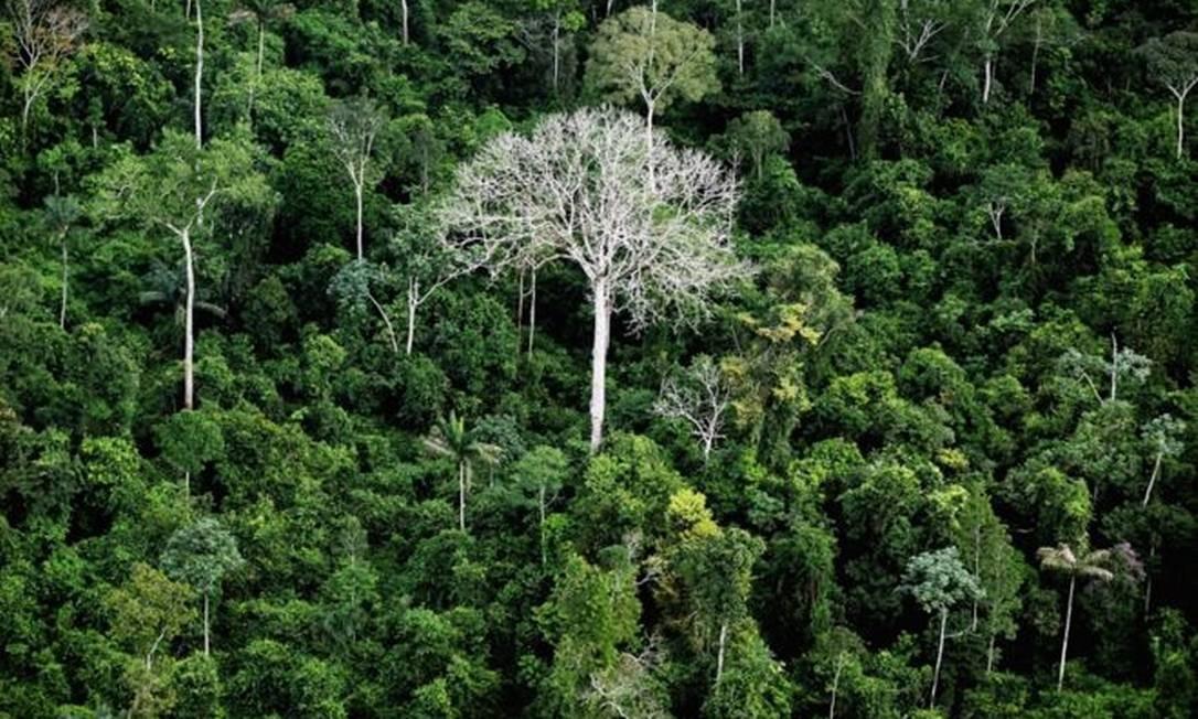 Perdas de floresta virgem contabilizadas por relatório podem ser, em muitos casos, a degradação, momento inicial de um processo de desmatamento Foto: Getty Images