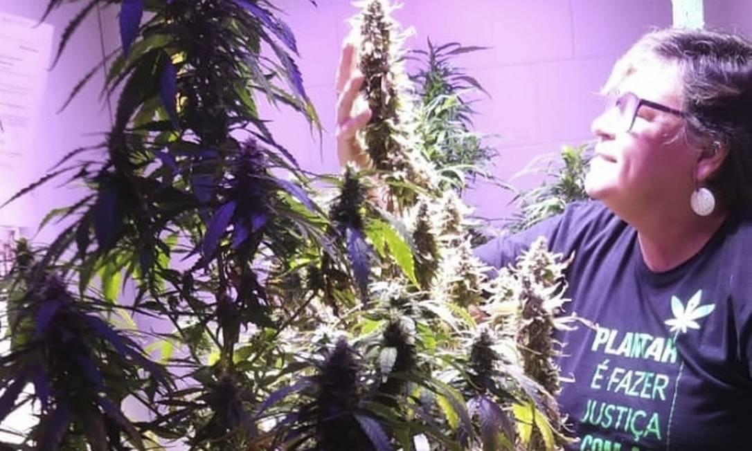 Com autorização judicial, Ana Santiago transforma em óleo as flores de Cannabis que cultuva em casa. Foto: Arquivo Pessoal