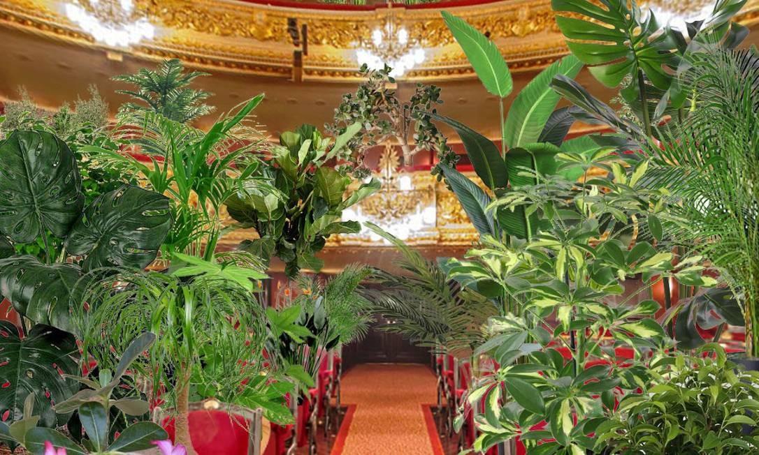 Reabertura do Liceu de Barcelona terá concerto exclusivo para plantas Foto: Divulgação