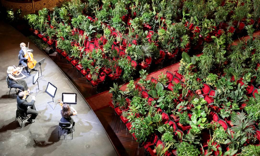 Cerca de 2.292 plantas de estufa que foram colocadas em cada assentoseriam doadas a profissionais de saúde na linha de frente do combate ao vírus Foto: NACHO DOCE / REUTERS