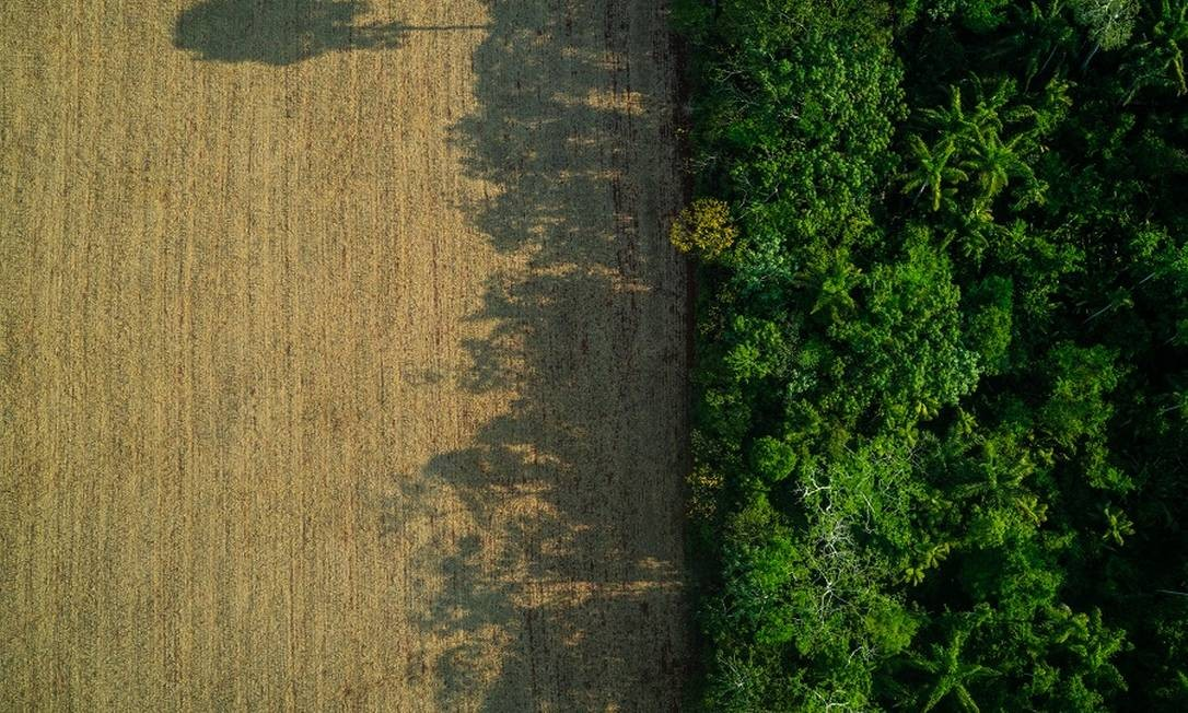 Contraste entre a floresta e área desmatada no Pará. Foto: Fábio Nascimento / Agência O Globo
