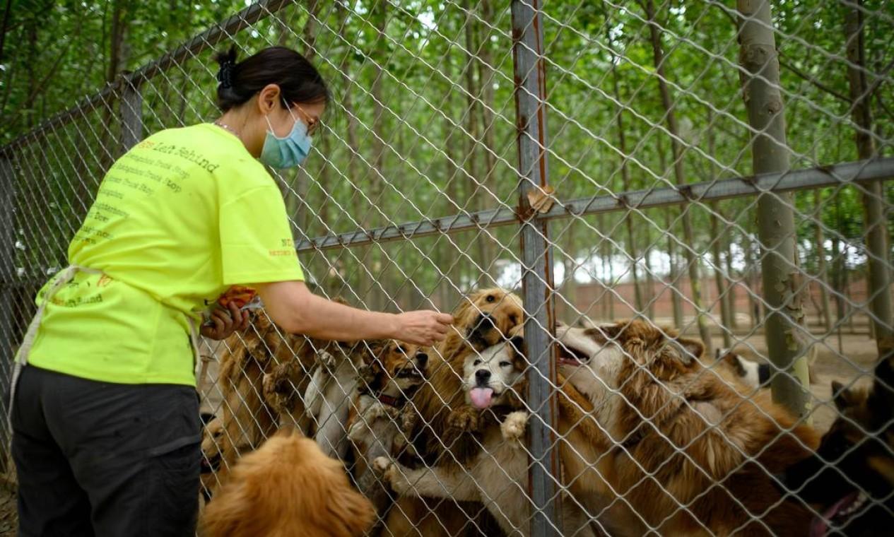 Ling dá petiscos a cães resgatados em um abrigo da ONG No Dogs Left Behind (Nenhum cão deixado para trás) Foto: NOEL CELIS / AFP