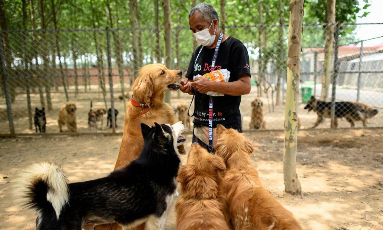 Nos últimos meses recebeu muitos cães de raça pura de fazendas de criação que foram descartados devido à menor demanda do consumidor por animais de estimação durante a pandemia Foto: NOEL CELIS / AFP