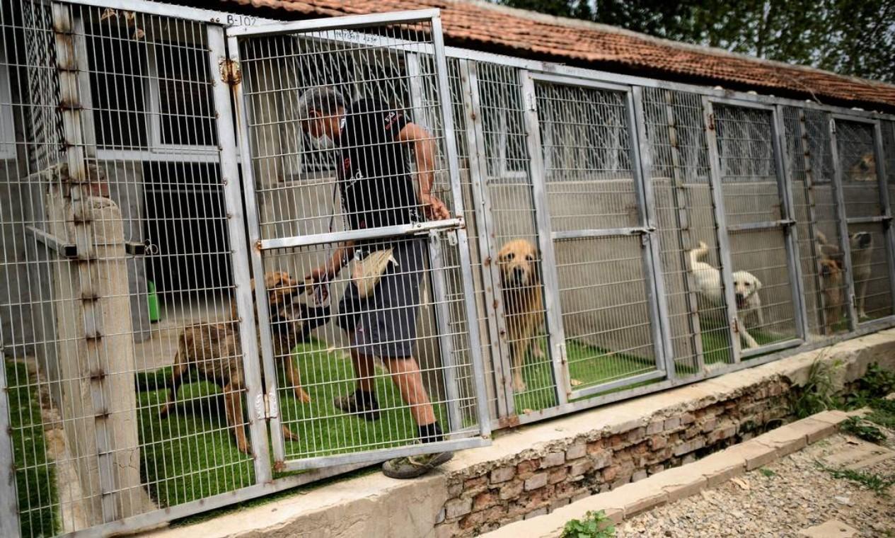"""Voluntário cuida de canil da ONG """"Nenhum cachorro deixado pra trás"""" Foto: NOEL CELIS / AFP"""