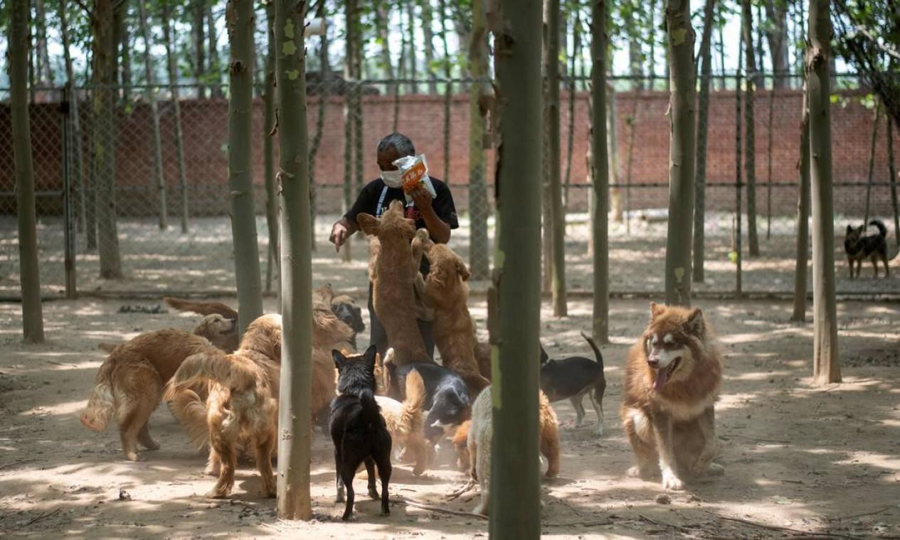 Apesar do debate sobre o fim do consumo de carne de algumas espécies, a cidade de Yulin, no sudoeste do país, inaugurou um festival de carne de cachorro – baixa adesão é histórica e alimenta a esperança de que seja a última edição Foto: NOEL CELIS / AFP