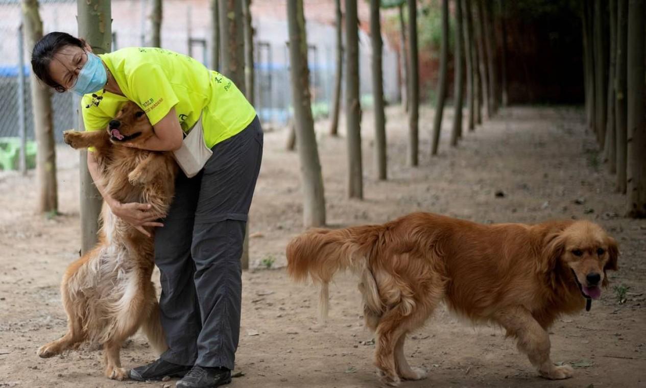 Voluntária abraça cão da raça golden retriever em abrigo. Baixa no consumo de carne na China fez crescer o número de animais resgatados, inclusive, os de raça pura Foto: NOEL CELIS / AFP