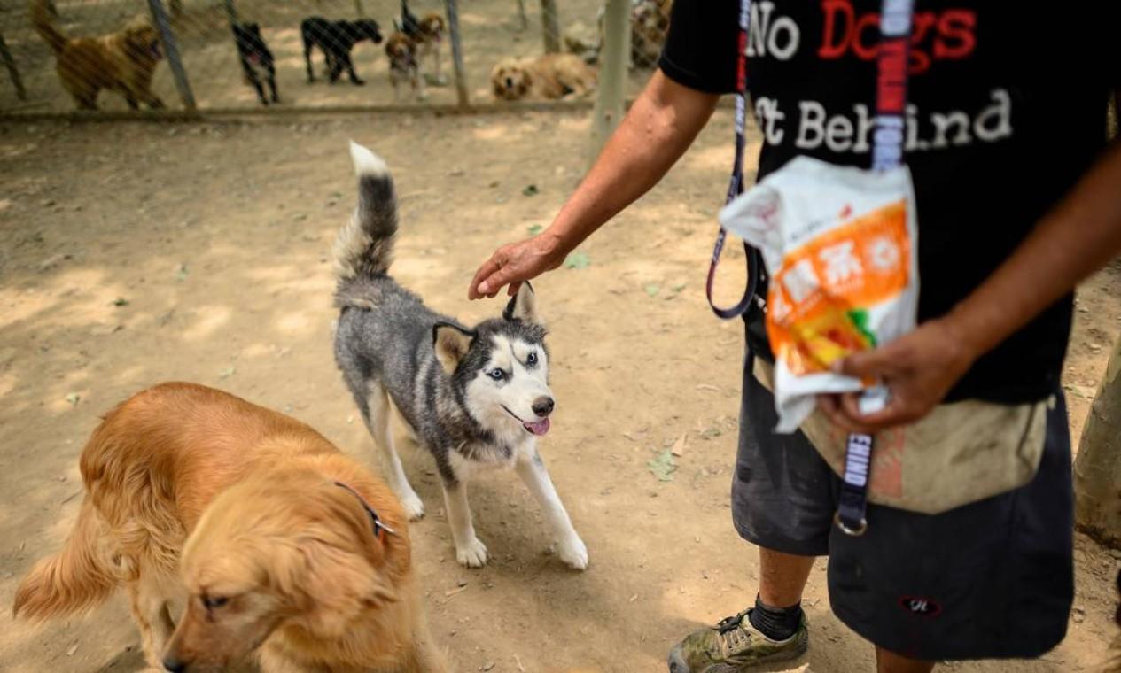 Baixa no consumo de carne na China fez crescer o número de animais resgatados, inclusive, os de raça pura Foto: NOEL CELIS / AFP