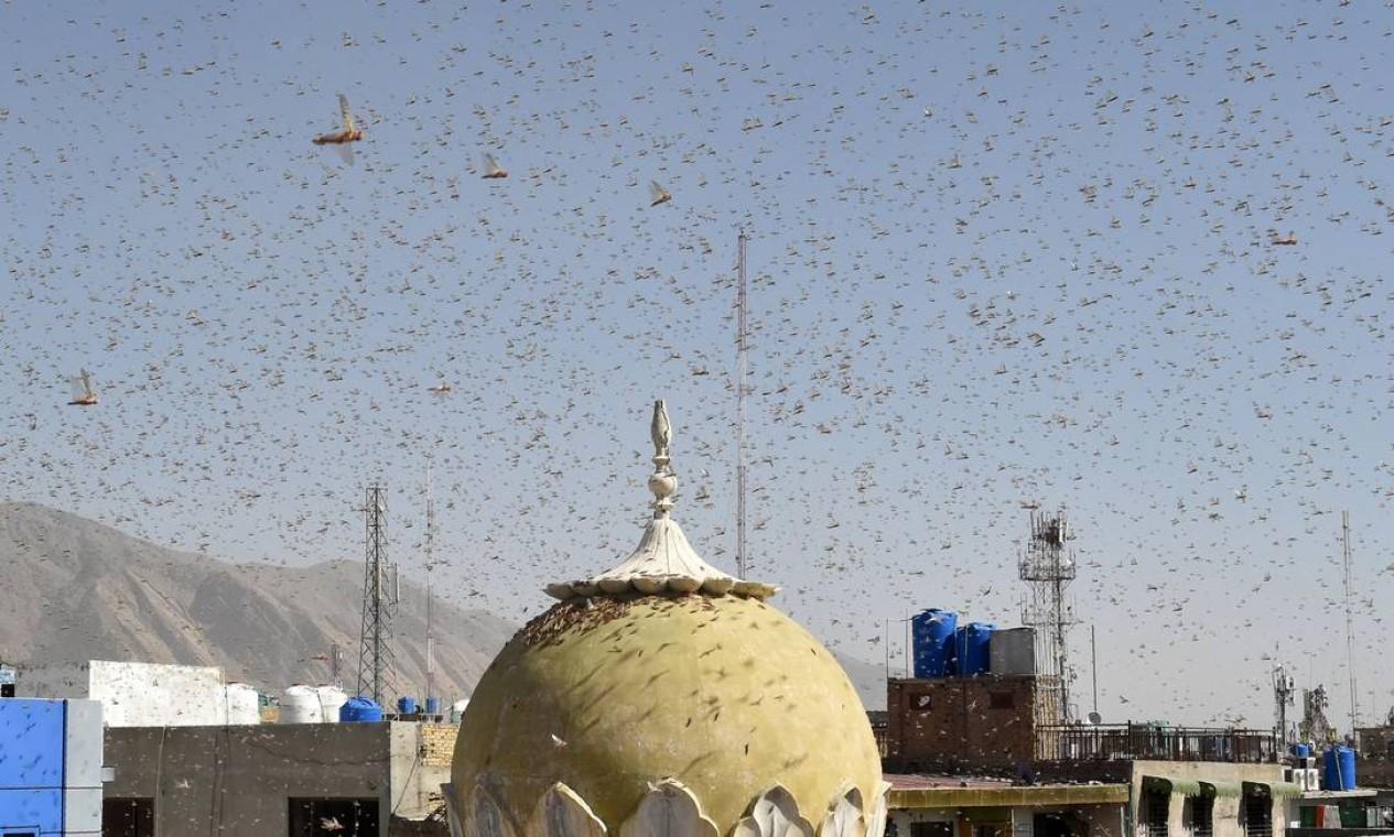 Enxame de gafanhotos em uma área residencial na cidade paquistanesa de Quetta, registrado no dia 12 de junho. Agricultores estão lutando com a pior praga de gafanhotos em 25 anos, destruindo colheitas inteiras no coração agrícola do Paquistão Foto: BANARAS KHAN / AFP