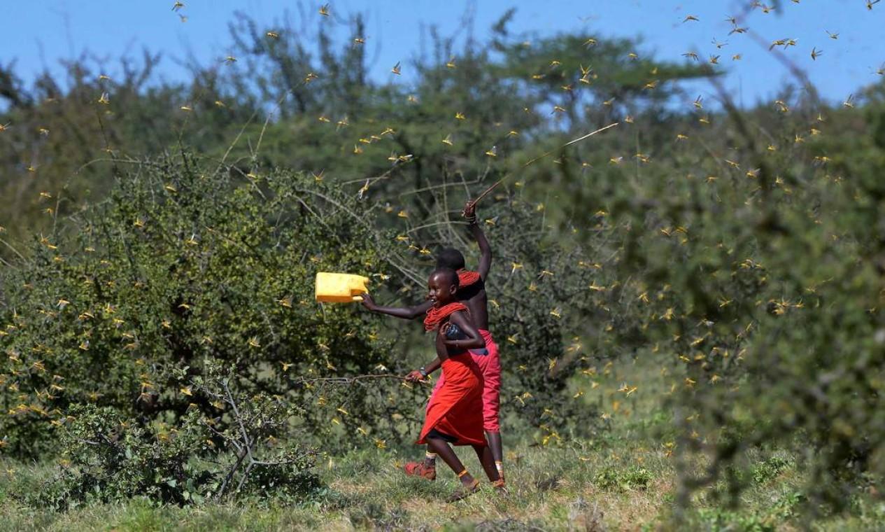 Em janeiro deste ano, um infestação de gafanhotos havia sido registrada em vegetação na vila de Lerata, no condado de Samburu, 300 quilômetros ao norte da capital do Quênia, Nairobi Foto: TONY KARUMBA / AFP