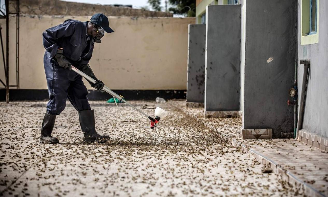 Membro do Serviço Nacional da Juventude pulveriza pesticidas em uma fazenda em Nakukulas, Turkana County, Quênia, em 7 de junho Foto: LUIS TATO / AFP