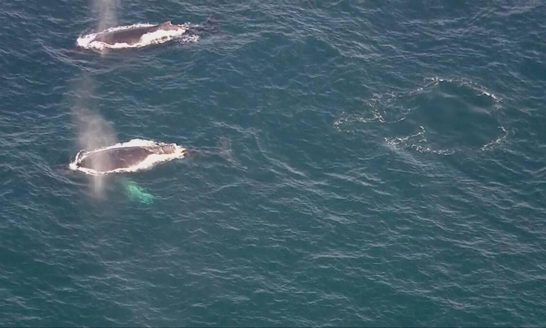 Baleias avistadas na Barra da Tijuca, Zona Oeste do Rio Foto: Reprodução/TV Globo
