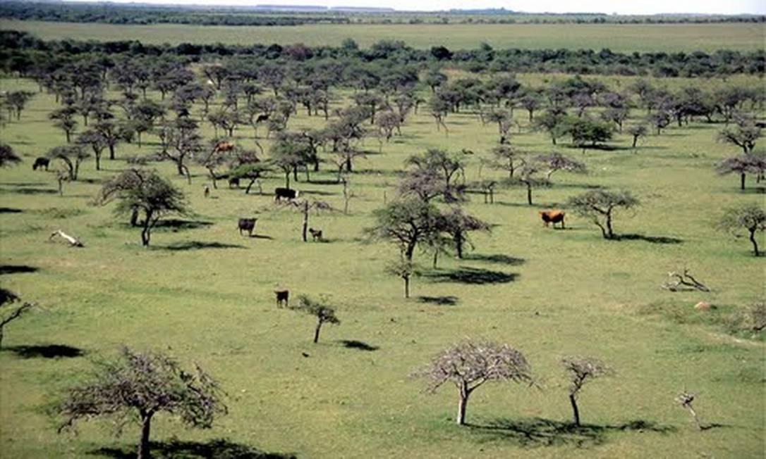 Uma região de pasto de Barra de Quaraí, no Oeste do Rio Grande do Sul Foto: Reprodução
