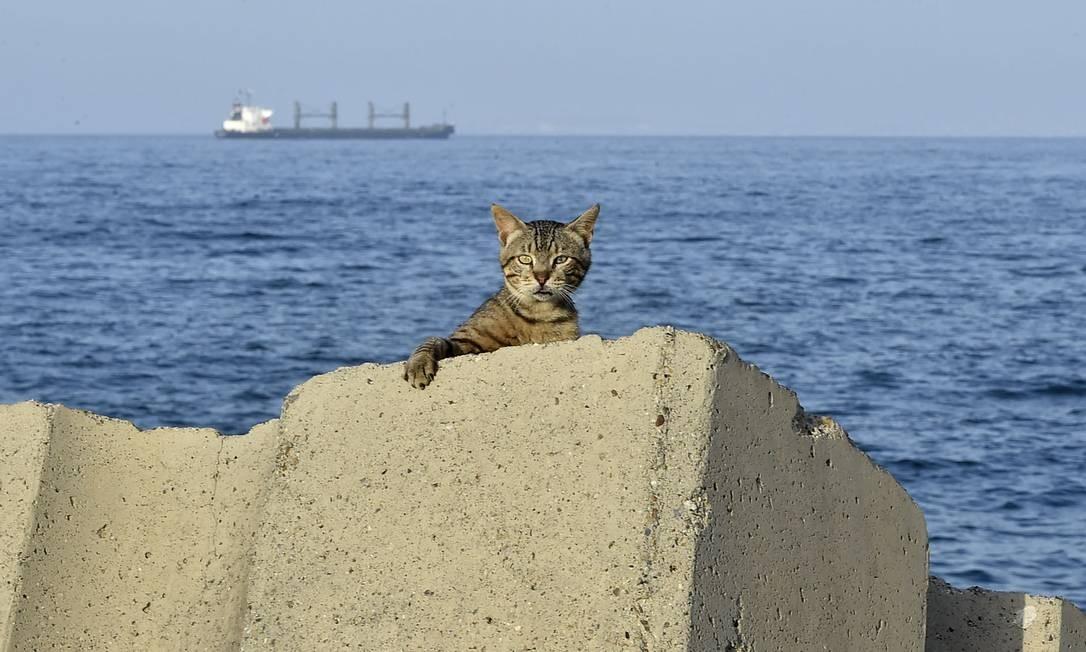Gato é retratado no passeio marítimo antes de um toque de recolher imposto pelas autoridades para impedir a propagação do coronavírus, no distrito de Bab el-Oued, na capital da Argélia, Argel Foto: RYAD KRAMDI / AFP