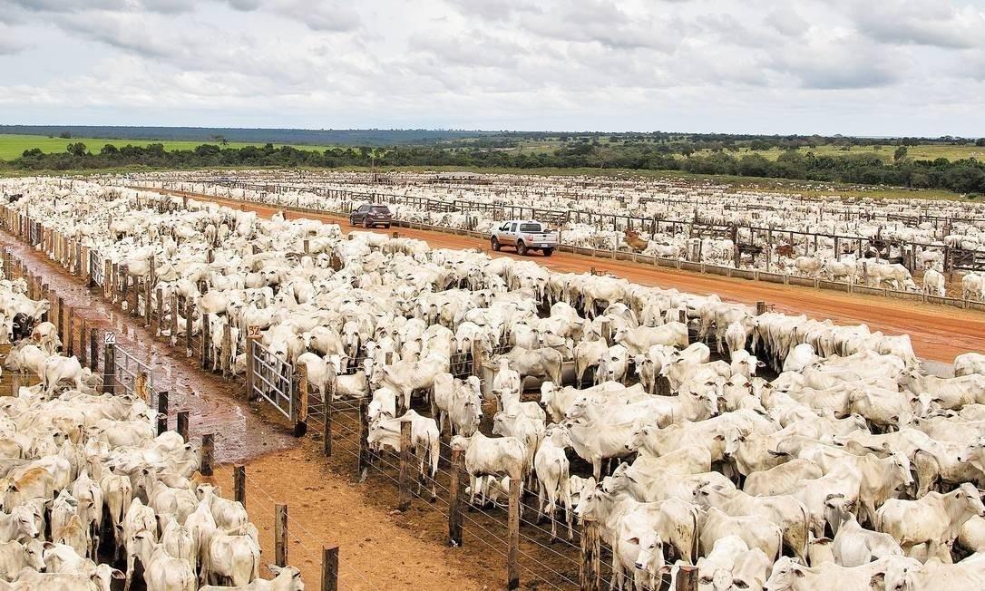 Em livro, biólogo responsabiliza modos de produção agroindustriais por pandemias dos últimos tempos Foto: Guito Moreto