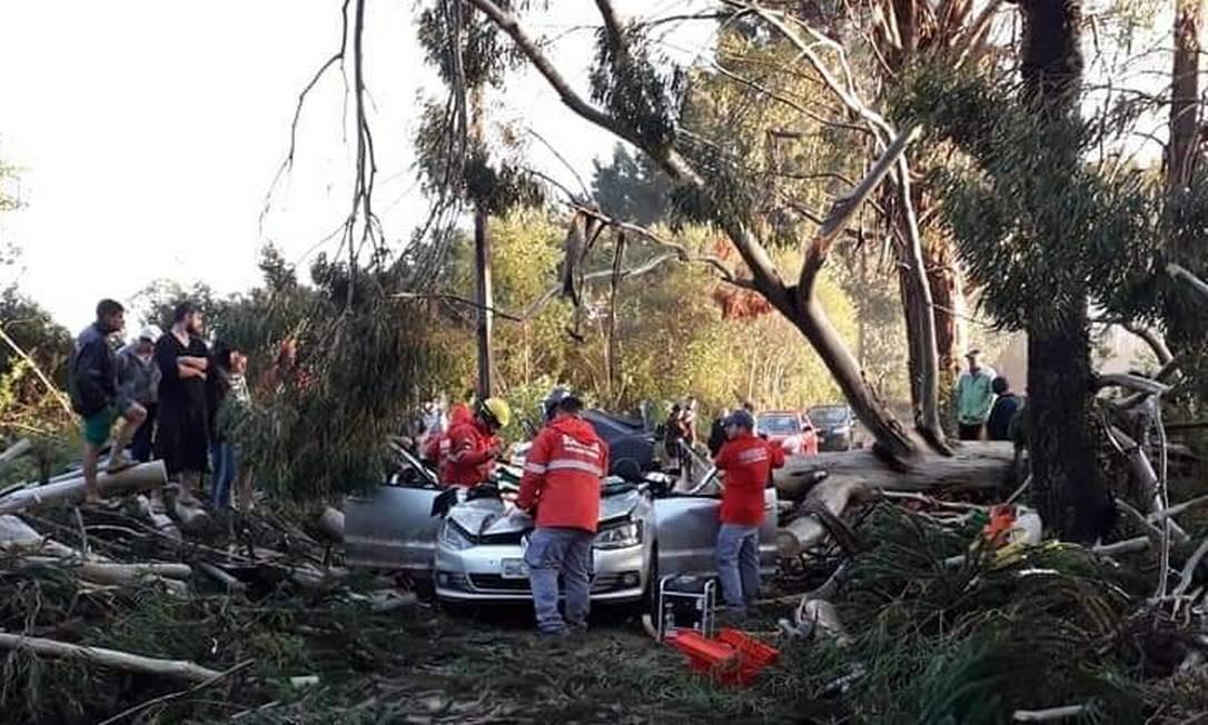 Miraci Fernandes, de 37 anos, estava em veículo atingido por eucalipto durante ciclone bomba Foto: Reprodução