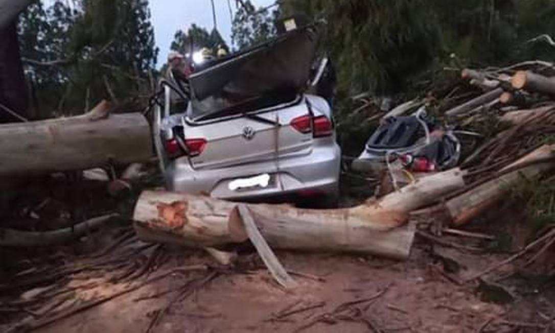 Árvore foi arrancada do solo e atingiu veículo em movimento na cidade de Itaiópolis, em Santa Catarina Foto: Reprodução