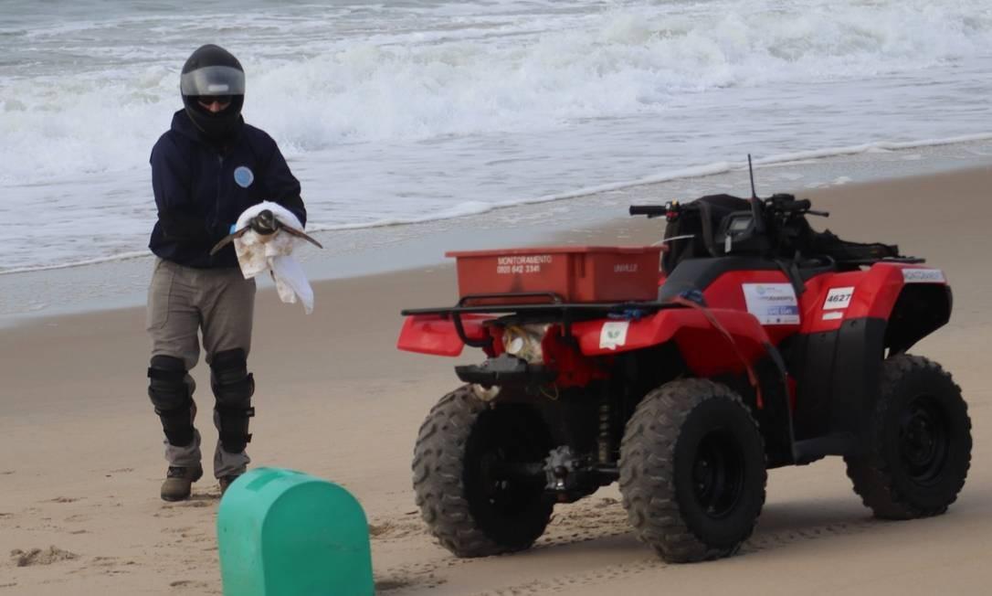 Resgate de pinguim na Praia Grande, em São Francisco do Sul Foto: Márcio José de Novaes