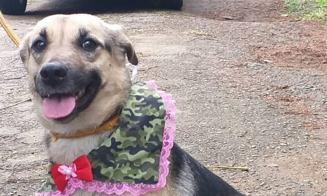 Cãozinho estiloso será um dos que estarão à procura de um novo companheiro durante a live Foto: Divulgação